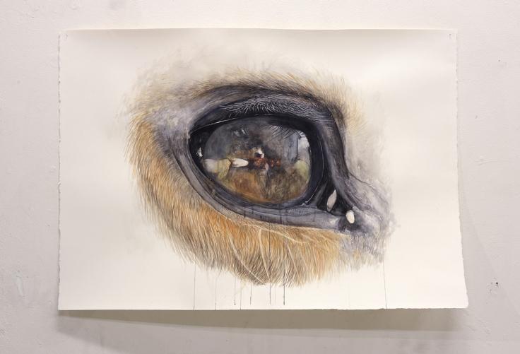 3.├ÿjet 2018. Akvarel pa╠è papir, 80x113cm. Gengivelse af min hests ene ├©je. Foto af Heidi Hove